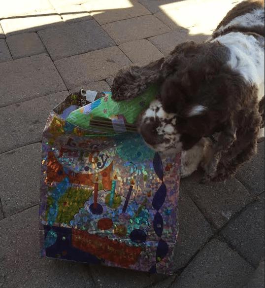 dog birthday present