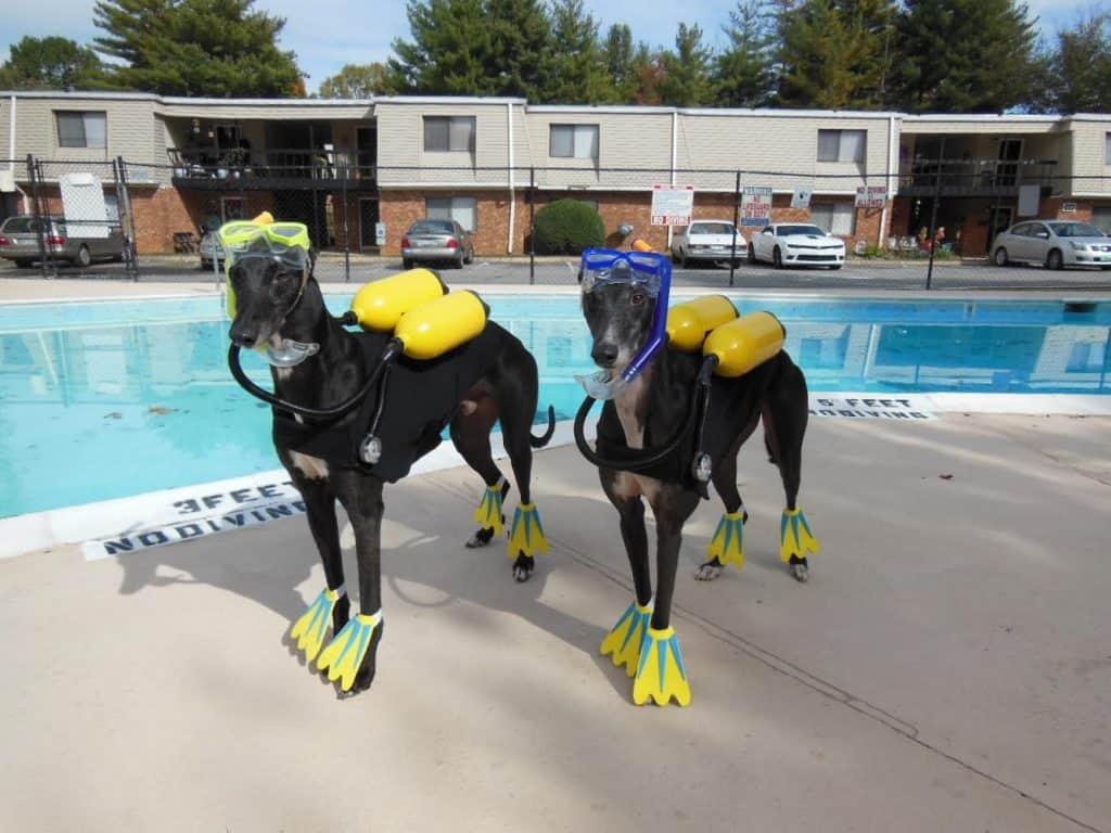 Dogs in scuba gear
