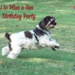 Fun Ideas to Host a Dog Birthday Party