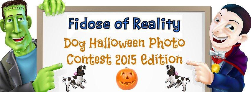 Halloween dog photo contest