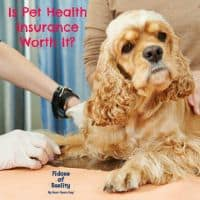 dog health insurance questions