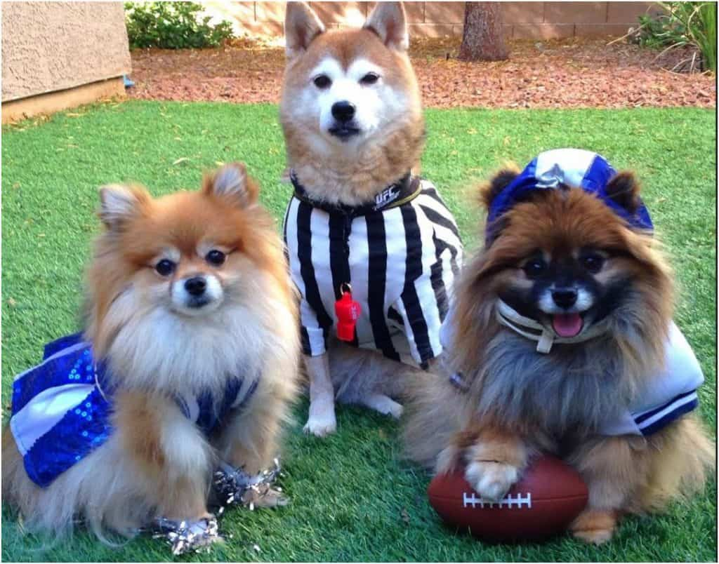 dog football players