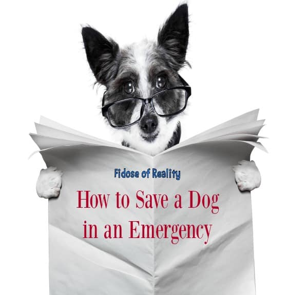 What to do in a dog emergency