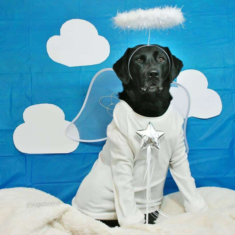 Dog dressed as angel