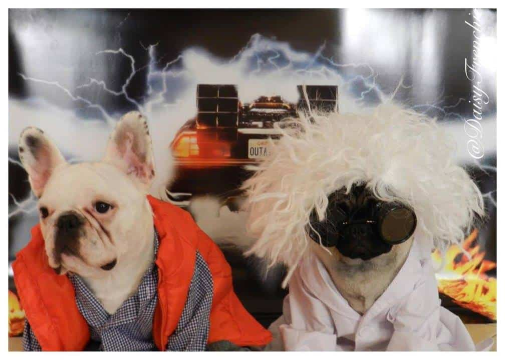 Dogs as Marty McFly and Doc Brown