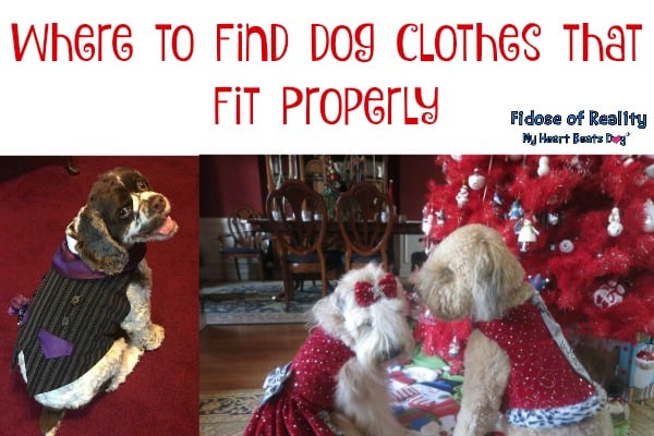 Where to Find Dog Clothes that Fit Properly