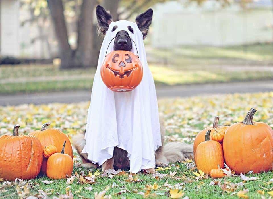 Dog costume ghost