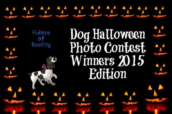Dog Halloween Photo Contest Winners 2015 Edition