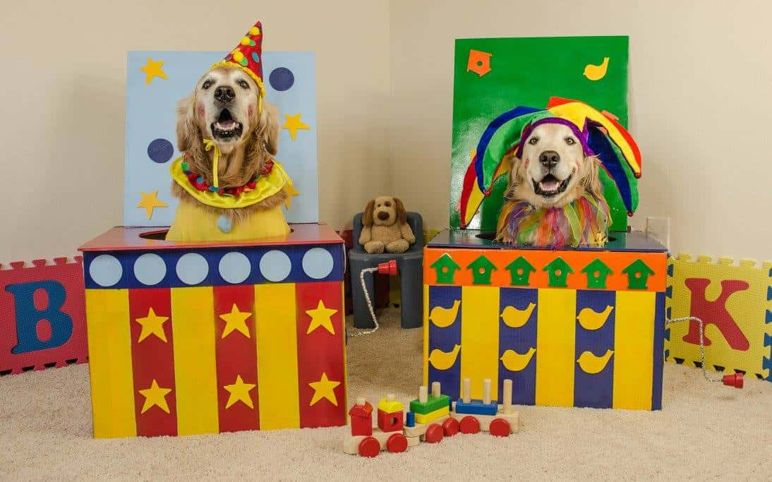 Dogs as Jack in the Box