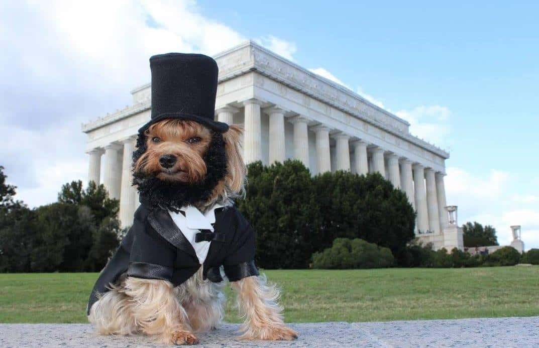 Dog dressed as Abraham Lincoln