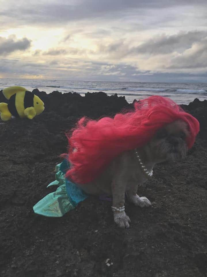 Dog as Little Mermaid