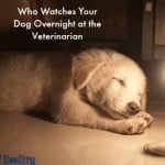 Who Watches Your Dog Overnight at the Veterinarian