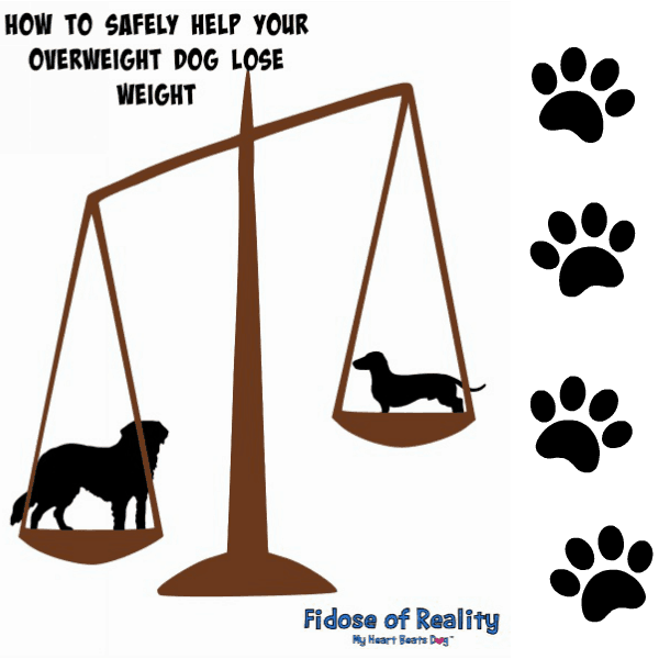 How to Safely Help Your Overweight Dog Lose Weight