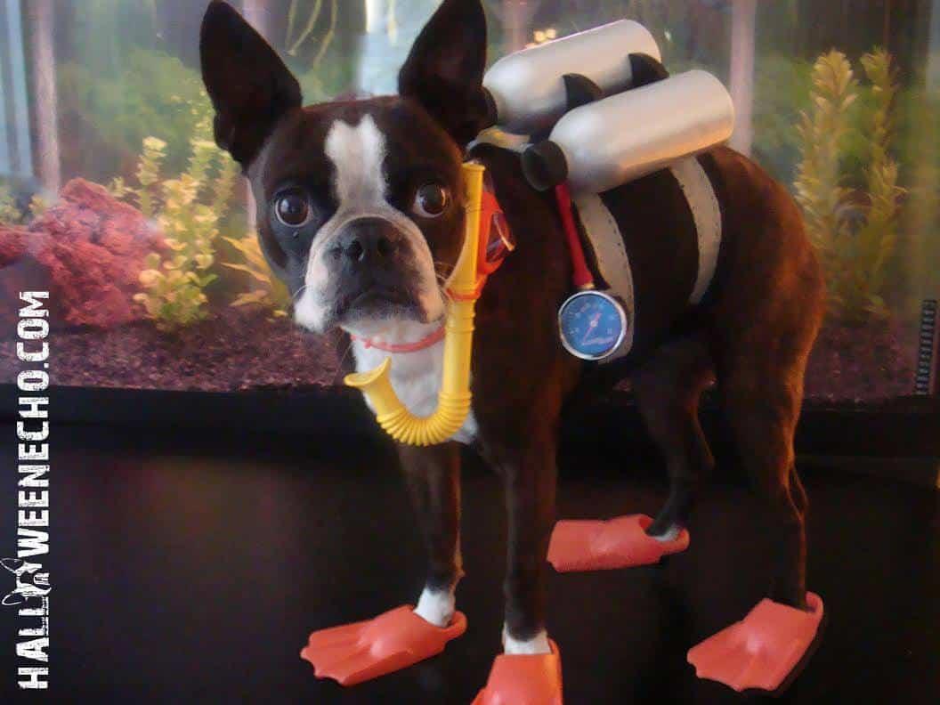 Dog as scuba diver