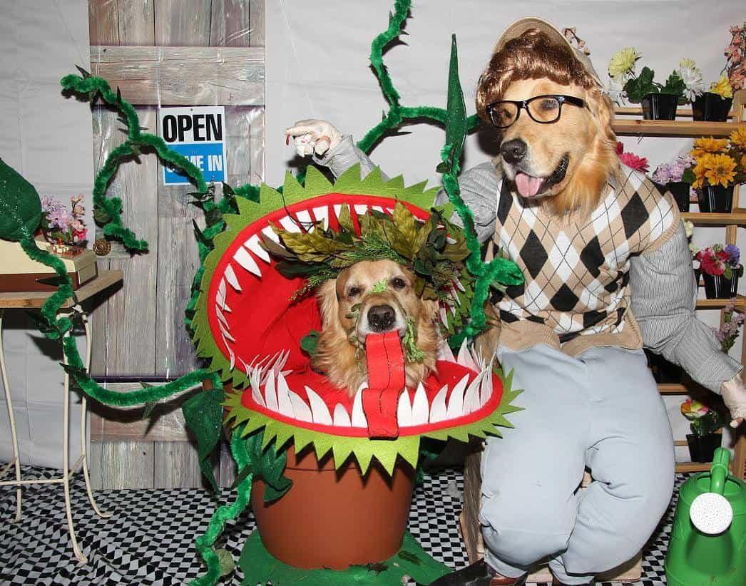 golden retrievers little shop of horrors - Pet Halloween Photo Contest