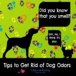 Tips to Get Rid of Dog Odors #Petiquette