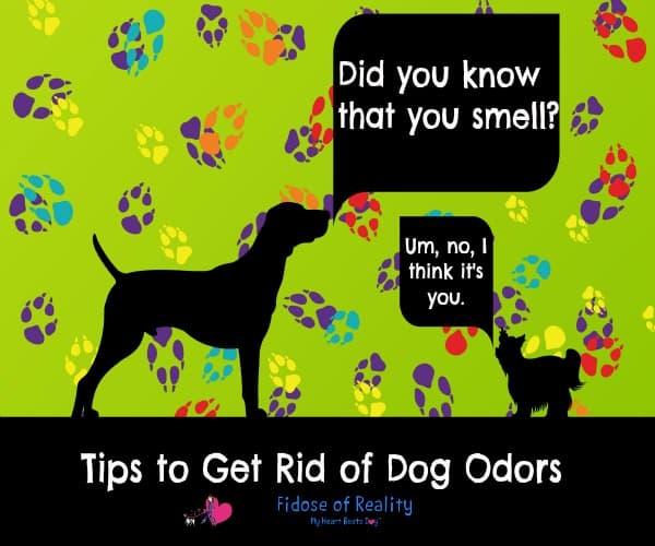 dog odor solutions