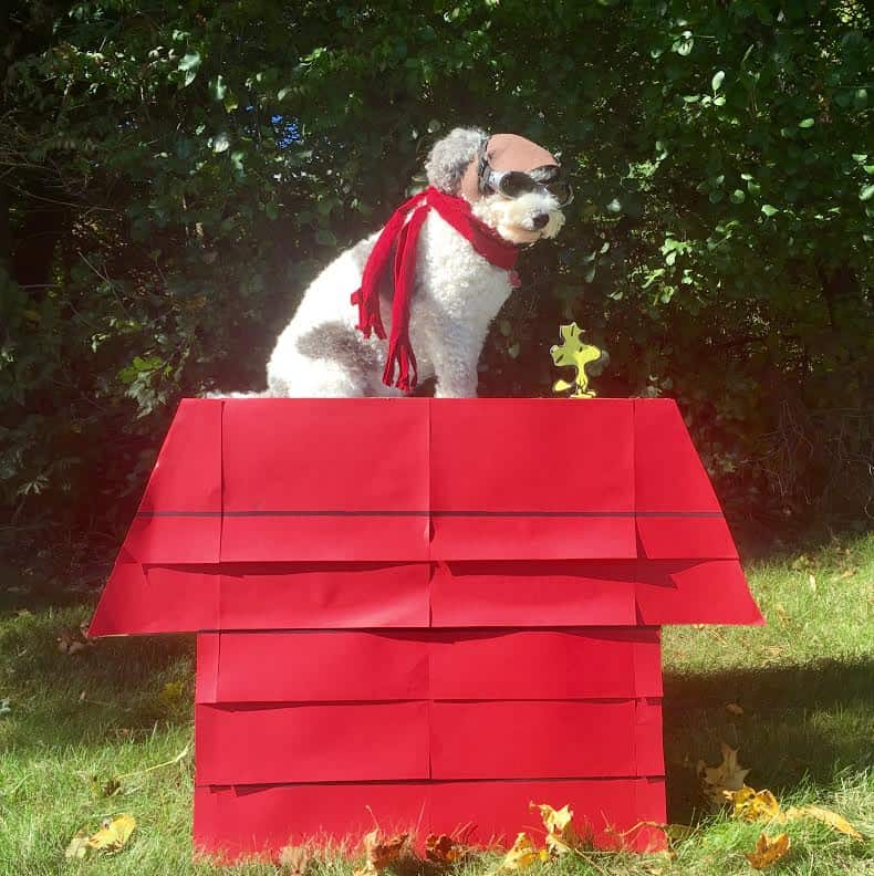snoopy red baron costume