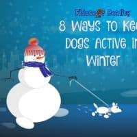 How to keep dogs active in winter