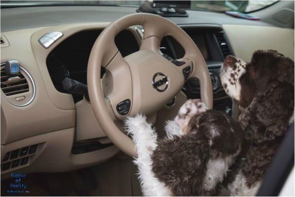 Febreze air clip dog