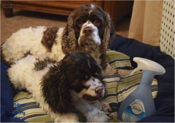 dog bedding Febreze
