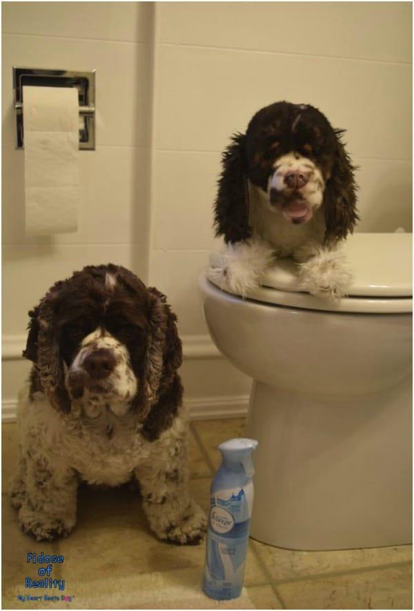 dog bathroom odor
