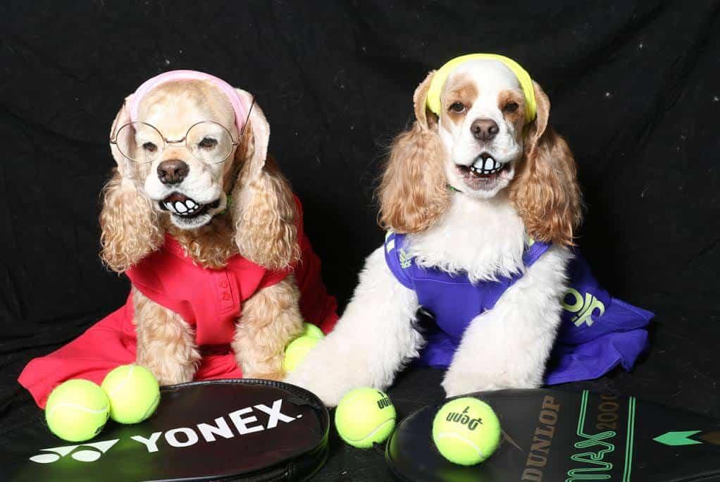 Dogs as tennis stars