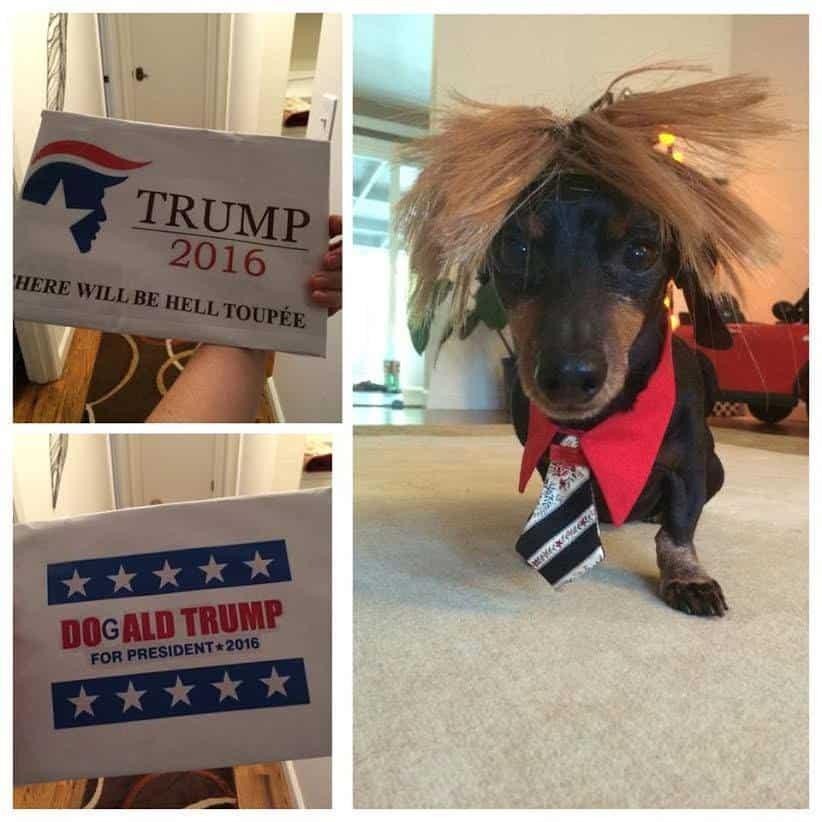Dog as Donald Trump