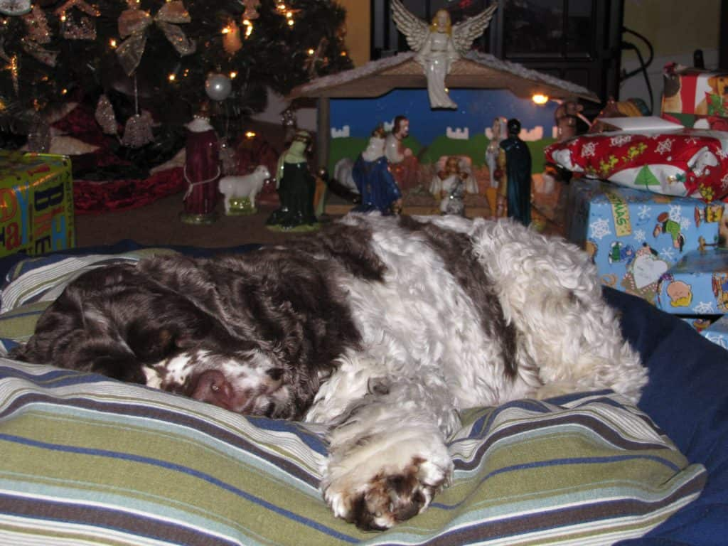 Silent Night dog