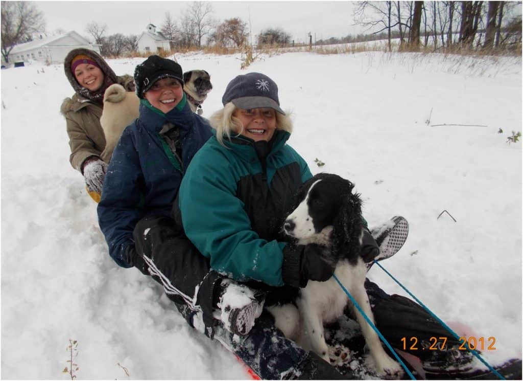 Sleigh ride dog