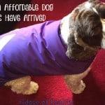 Custom Affordable Dog Coats Have Arrived