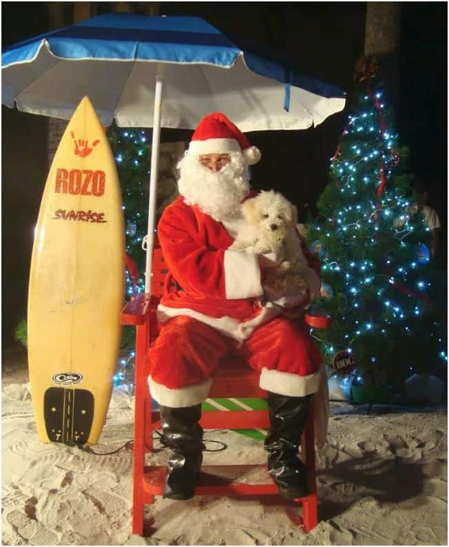 Beach dog Christmas photo