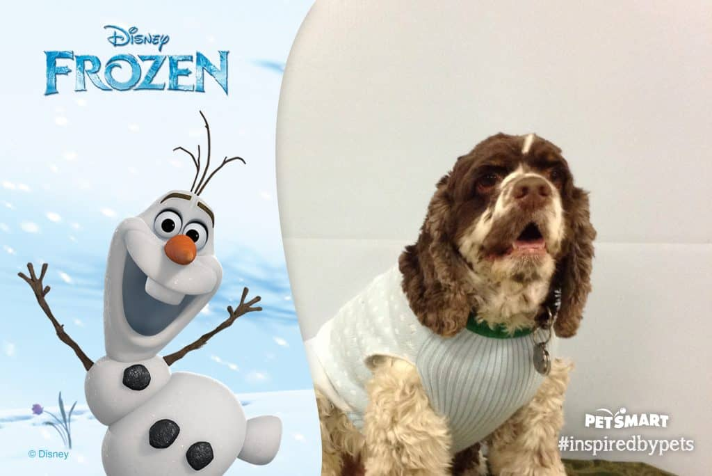 Disney Olaf with Cocker