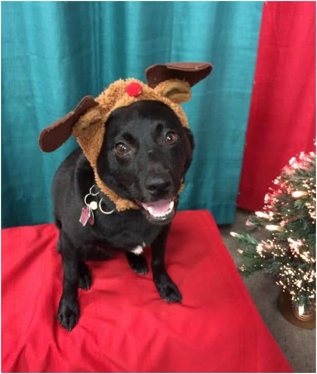 Dog Christmas card antlers