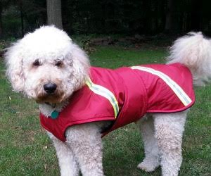 Big dog winter jacket De Hufford