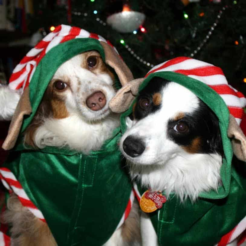 Dog elves