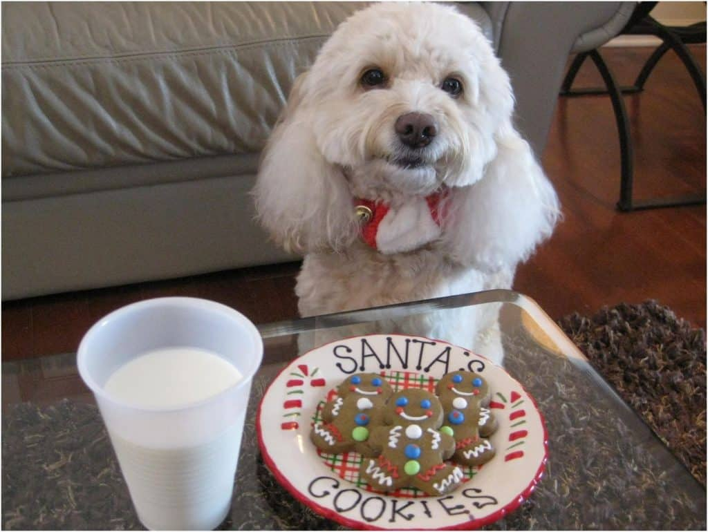 Santa milk and cookies dog