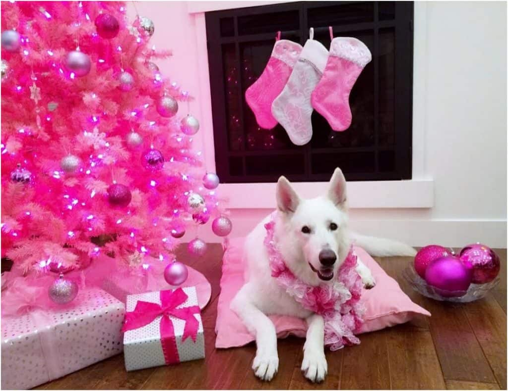 Pink Christmas card dog