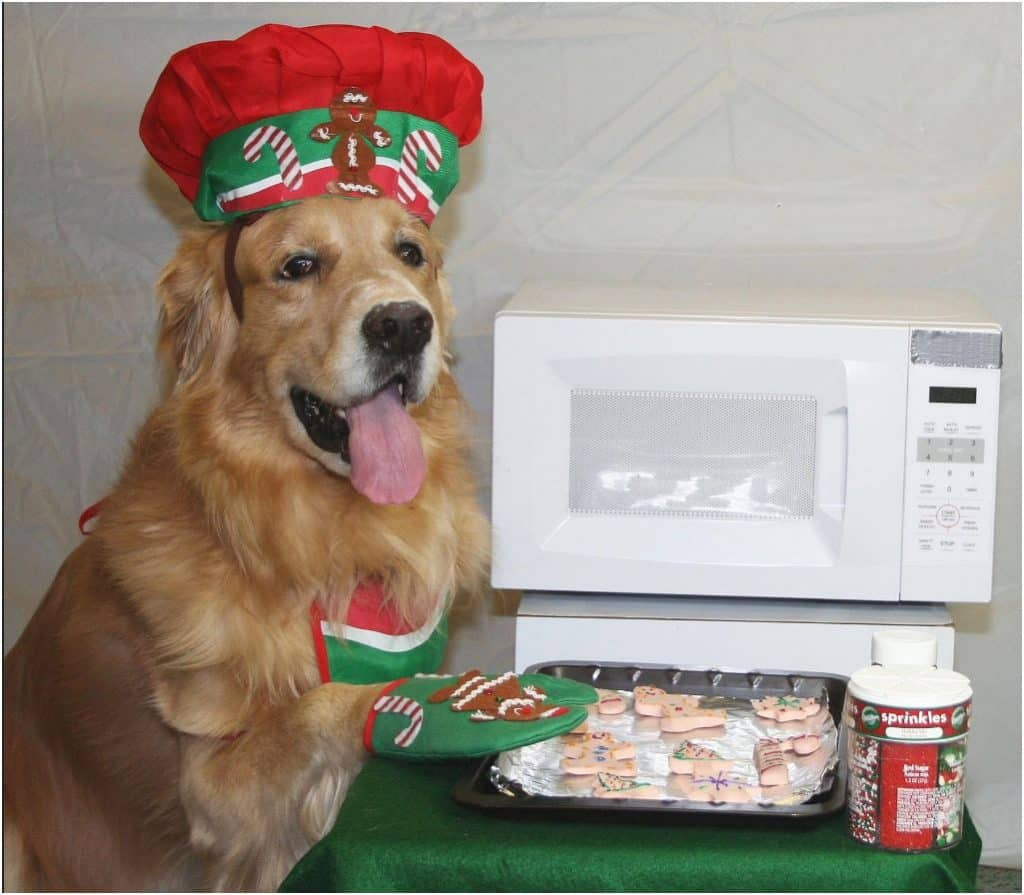 Dog chef for holiday card