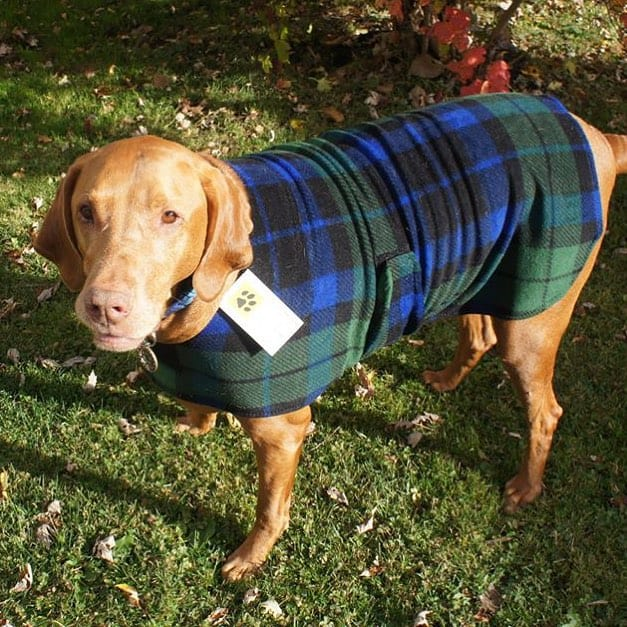 Dog Winter Jacket
