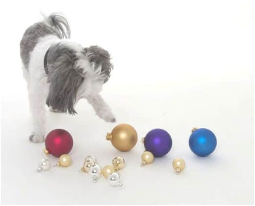 Dog playing with ornaments