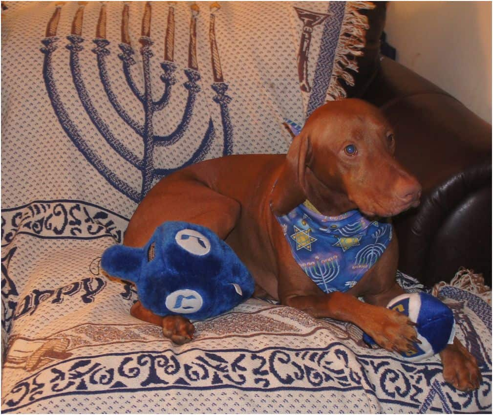 Dog celebrating Hanukkah