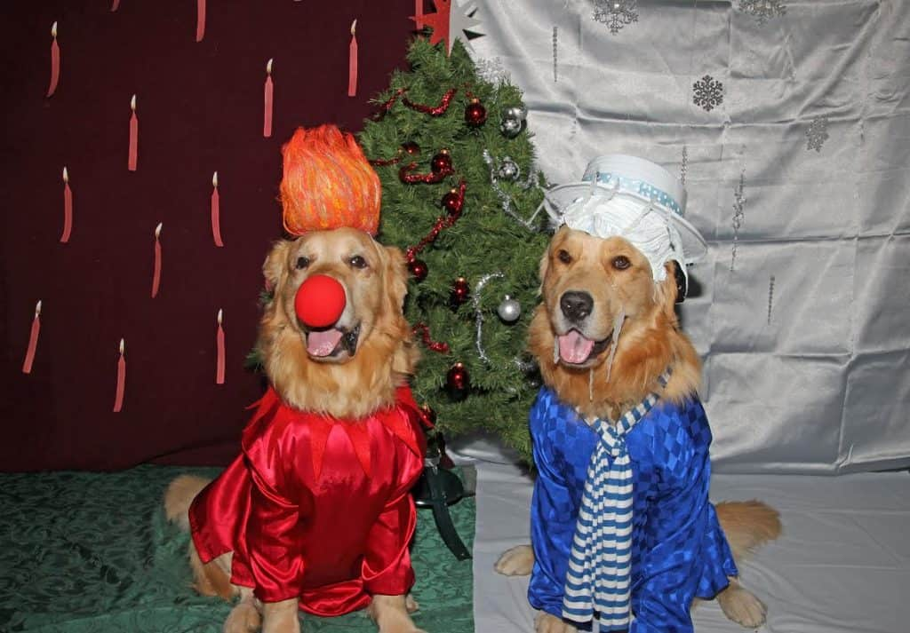 Freeze Miser Heat Miser dogs