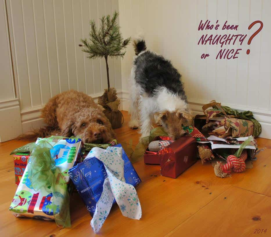 Naughty christmas dogs