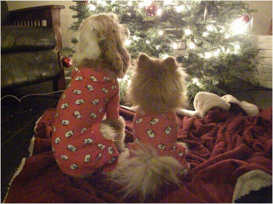 Dogs waiting for Santa