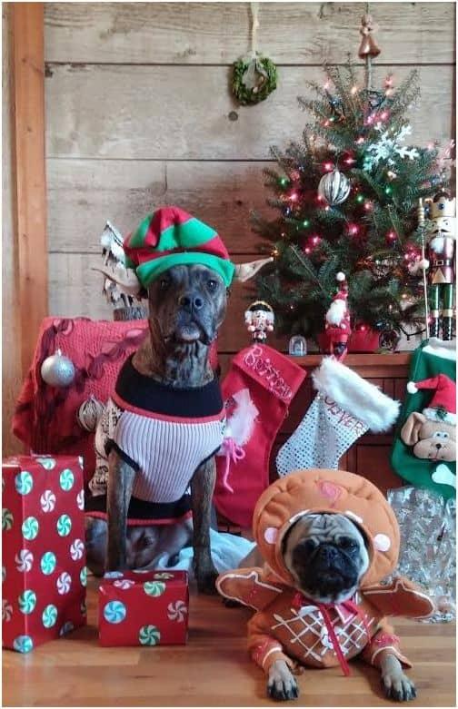 Cute dogs Christmas winner