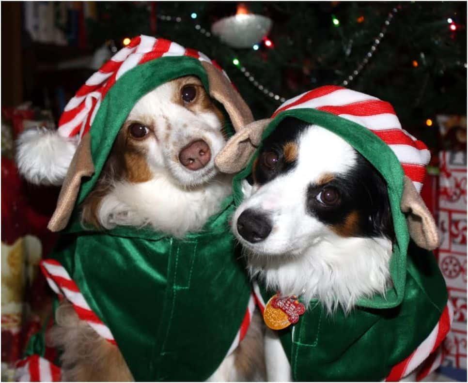 Christmas elves dogs
