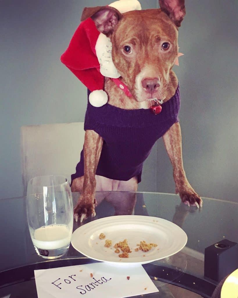 Cute dog waiting for Santa