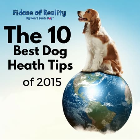 The 10 Best Dog Health Tips of 2015