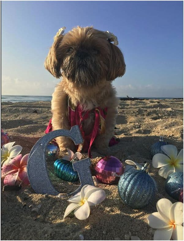 Dog in Hawaii for Christmas